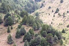 Drzewa w górach w naturze obrazy royalty free
