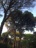 Drzewa w gaju zdjęcie royalty free
