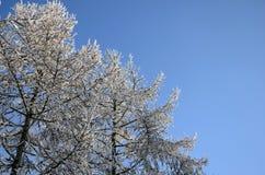 Drzewa w inie Obrazy Stock