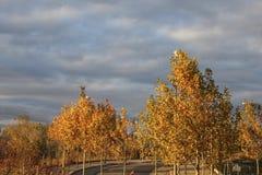 Drzewa w jesień dniu z złotym światłem Zdjęcia Stock