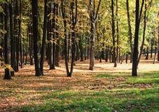 Drzewa w jesień Zdjęcie Royalty Free