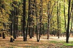 Drzewa w jesień Zdjęcia Stock