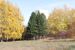 Drzewa w jesień Obrazy Stock