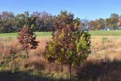 Drzewa w jesieni Fotografia Royalty Free