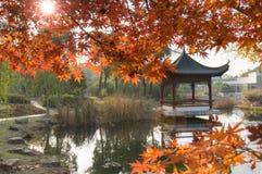 Drzewa w jesieni fotografia stock