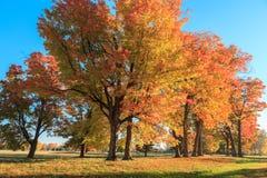Drzewa w jesieni Obrazy Royalty Free