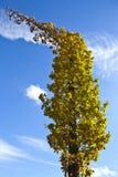 Drzewa w jesieni 5 Zdjęcia Stock