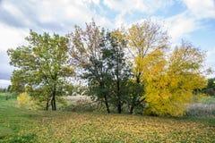 Drzewa w jesieni Obraz Stock