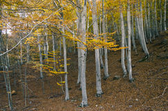 Drzewa w jesieni, rocznika filtra skutek Zdjęcia Stock