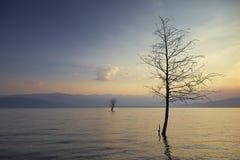 Drzewa w jeziorze Obraz Royalty Free