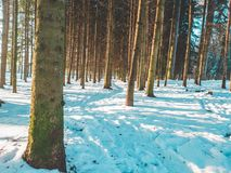 Drzewa w lesie obrazy royalty free