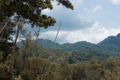 Drzewa w lesie obrazy stock