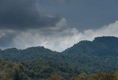 Drzewa w lesie fotografia stock
