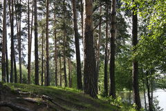 Drzewa w lesie jeziorem Deciduous i iglaści drzewa Obrazy Stock