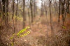 Drzewa w lesie przy jesienią, Fotografia Royalty Free