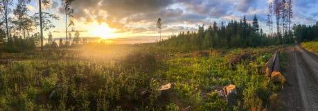 Drzewa w lesie uszkadzającym podczas wiatrowej burzy zdjęcia stock