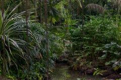 Drzewa w luksusowym tropikalnym lesie deszczowym obrazy stock