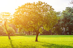 Drzewa w Lumpini parku, Bangkok Fotografia Stock