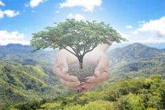 Drzewa w mężczyzna ręki klejeniu z nieba na zamazanym tle Pojęcie naturalni drzewa wznawiać las Obraz Royalty Free