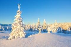 Drzewa w magicznych płatkach śniegu Fotografia Stock