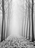 Drzewa w mgłowym dniu Obrazy Royalty Free