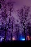 Drzewa w mgłowym parku Zdjęcie Stock