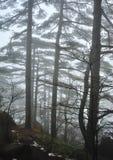 Drzewa w mgle Fotografia Stock