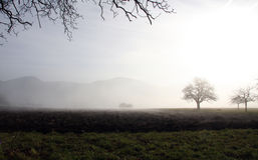Drzewa w mgle Obraz Royalty Free