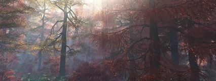 Drzewa w mgle Jesień las w mgle Zdjęcie Stock