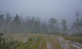 Drzewa w mgle w chmurnym dniu Obraz Stock