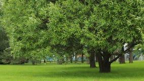 Drzewa w miasto parka lata zieleni trawie zbiory wideo