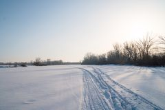 Drzewa w mroźnym powietrzu na śnieżystej haliźnie Obraz Royalty Free