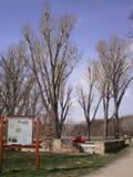 Drzewa w naturze Obrazy Stock