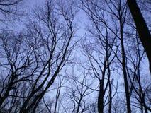 Drzewa w naturze Zdjęcia Stock
