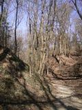 Drzewa w naturze Fotografia Stock