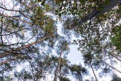 Drzewa w niebie Fotografia Stock
