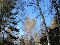 Drzewa w niebie w wiośnie Zdjęcia Stock