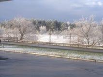 Drzewa w śniegu obrazy stock