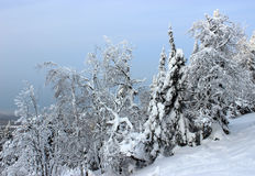 Drzewa w śniegu Zdjęcie Stock