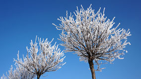 Drzewa w śniegu przeciw niebu Zdjęcie Royalty Free