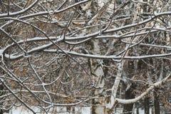 Drzewa w śniegu w Grudniu w parku w Moskwa Zdjęcie Stock