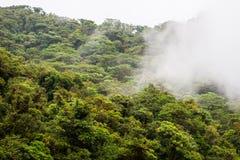 Drzewa w obłocznym lesie obrazy stock