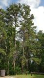 Drzewa w ogródzie Zdjęcia Stock