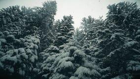 Drzewa w opadzie śniegu, niskiego kąta strzał Zdjęcia Stock