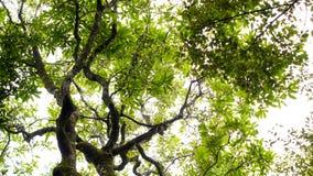 Drzewa w Północnym Tajlandia Fotografia Stock
