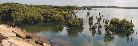 Drzewa w pływowych wodach Obrazy Stock