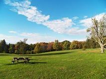 Drzewa w Październiku Obraz Royalty Free