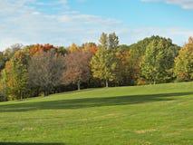 Drzewa w Październiku Obraz Stock
