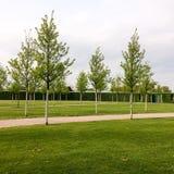 Drzewa w parku zdjęcie stock