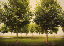 Drzewa w parku Fotografia Royalty Free